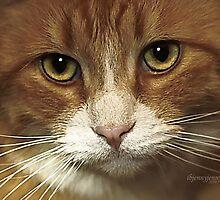 Sammy's Eyes by ibjennyjenny