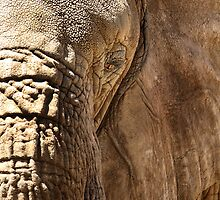 African Elephant by Erik Anderson