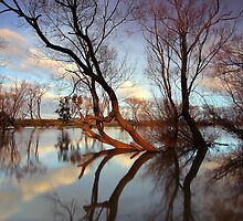 """The Tree's"" by Husky"