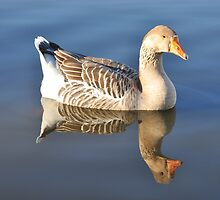 Goose by Hans Kool