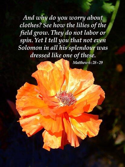 Solomon's Splendour by Samantha Higgs