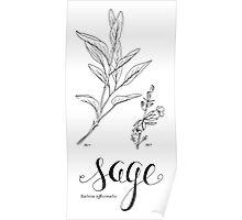 Sage - art print Poster