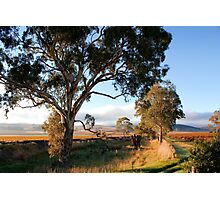 Barossa Valley Autumn Sunshine Photographic Print