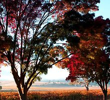 Autumn Sunrise in the Barossa by John Wallace