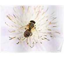 Honey,honey Poster
