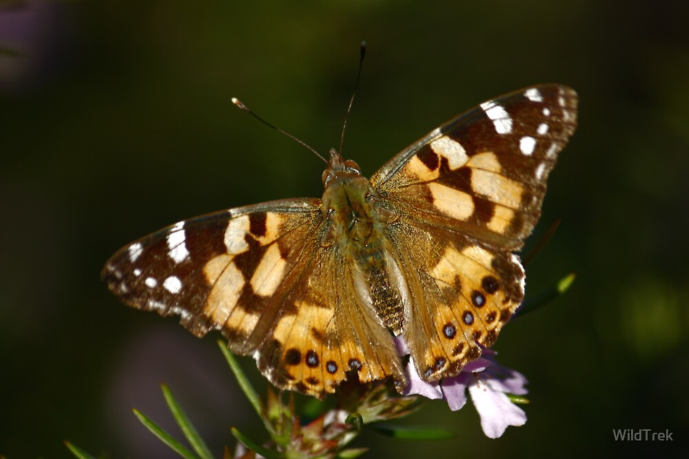 Flutterby by Mark  Hodges