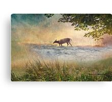 White Tail Deer Touting the Water - Parc National Mont Tremblant Canvas Print