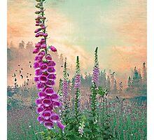Foxglove in Washington State Photographic Print