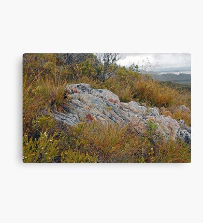 Bush Sculpture Canvas Print