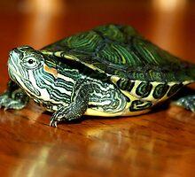 Pet Turtle by Paulette1021