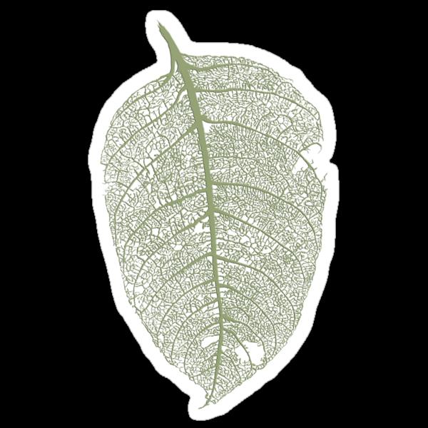 Leaf skeleton by Fay Helfer