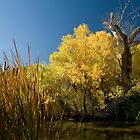 Fall color on the Owens River near Lone Pine, California by Rick Ferens