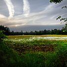 daisy field by Bill vander Sluys
