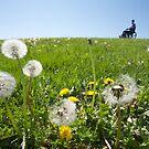 Dandelions by Marlene Hielema
