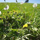 Weeds by Marlene Hielema