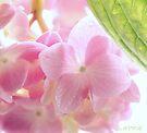 Hydrangea 5 by aMOONy