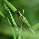 Large red  by Russell Couch