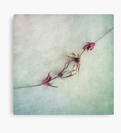 Caressing Touch Canvas Print