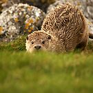 I See You by Gary Buchan