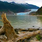 Natural Alaska by Barbara  Brown