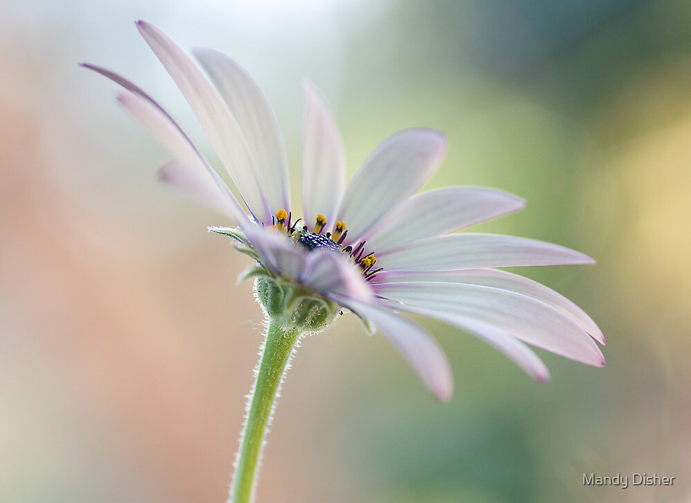 Summer beauty by Mandy Disher