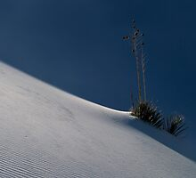 Yucca and Shadow, White Sands by Rick Ferens