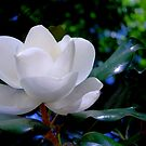 Magnolia by Sandra Moore