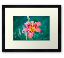 Flower at the end of the driveway Framed Print