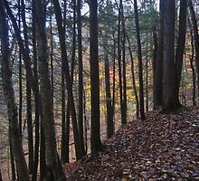 Stained Glass Woods by RVogler