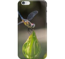 Dasher on Hibiscus Bud iPhone Case/Skin