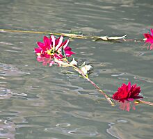 Floating Flowers by Martha Sherman