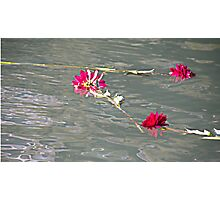 Floating Flowers Photographic Print