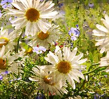 Field of Daisies by indeannajones