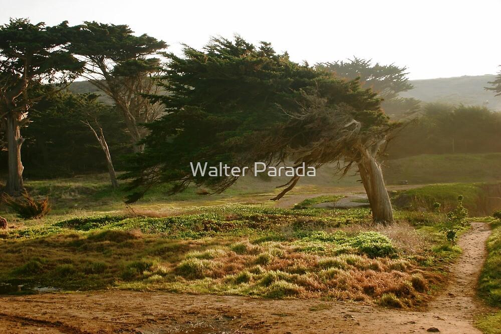 Coastal Tree by Walter Parada