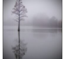 Lonely Tree by Florence Womacks