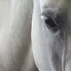 Eye of a Lipizzan Horse by Florence Womacks