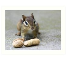 Got Nuts? Art Print