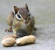 Got Nuts? by Lori Deiter