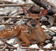 New born deer by DBArt