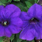 Purple Passion by starlite811
