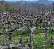 Vines in winter. Napa California. Sticker