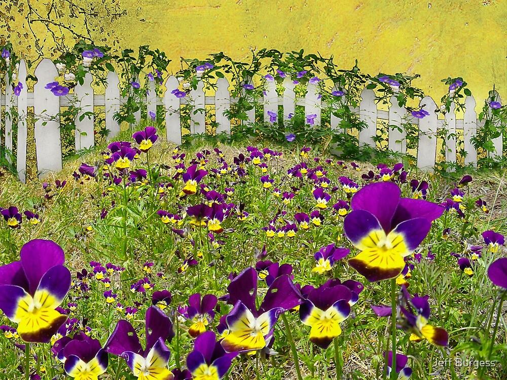 Violets In Washington by Jeff Burgess