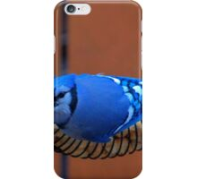 BlueJay @ the Feeder iPhone Case/Skin