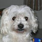 Molly - my girl by Wilhelmina