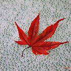 Red maple leaf by marija pavlovic