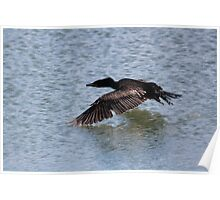 Cormorant in flight Poster