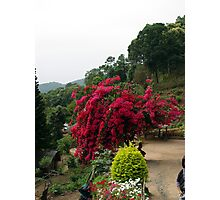 Chiang Mai 13 Photographic Print