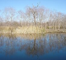 Dry Landcsape Reflected by Diego Re