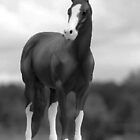 QH Stallion by bassgirl1970