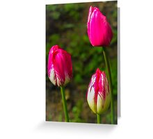 Spring garden (Flowers collection) Greeting Card